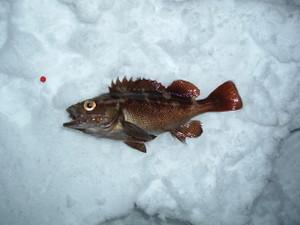 2009_0112fish0001