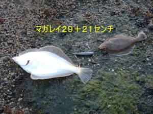 2009_0512ryugasaki0003