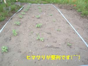 2010_0618ranshima0001