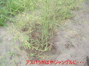 2010_0618ranshima0004