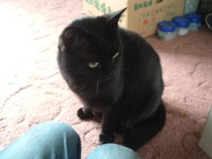 2011_0410cat0002_2