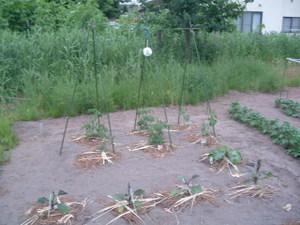 2011_0624tomanishi0005
