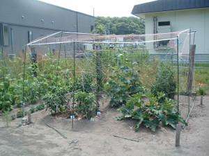 Farmsummer_001