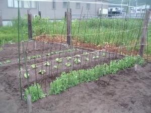 Farm614_001
